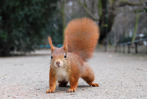 Squirrel-Cute