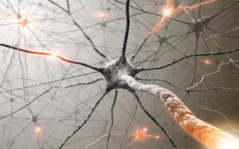 neuron470